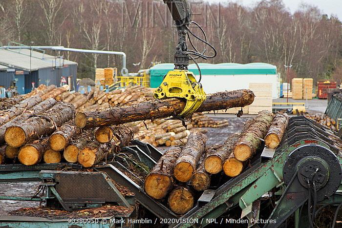 Processing spruce trunks in BSW sawmill, Boat of Garten, Inverness-shire, Scotland, UK, February 2012  -  Mark Hamblin/ 2020V/ npl