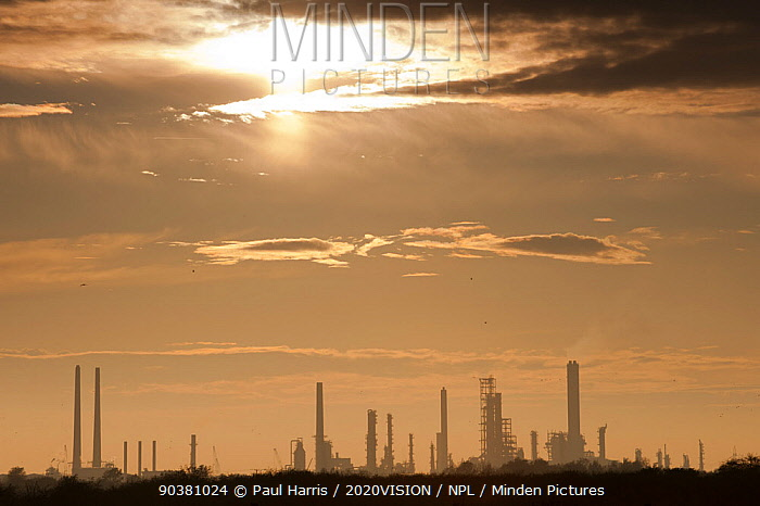 West Canvey Marsh, with industrial buildings on in the distance on horizon, Essex, England, UK, November  -  Paul Harris/ 2020V/ npl