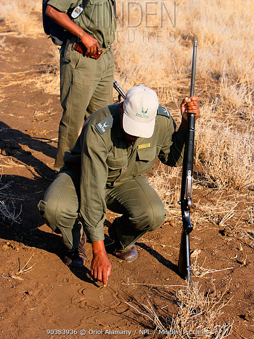 South African Parks rangers following tracks whilst on a patrol near Olifants, Kruger National Park, Transvaal, South Africa, September 2008  -  Oriol Alamany/ npl