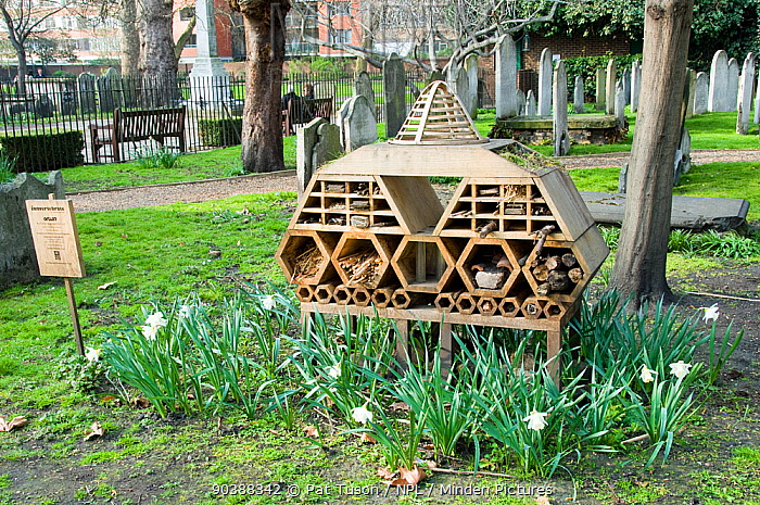 Innvertebrate', the Boutique Bug Hotel or Insect House situated amongst gravestones, Bunhill Fields Burial Ground or Cemetery, London Borough of Islington, London, England, UK  -  Pat Tuson/ npl