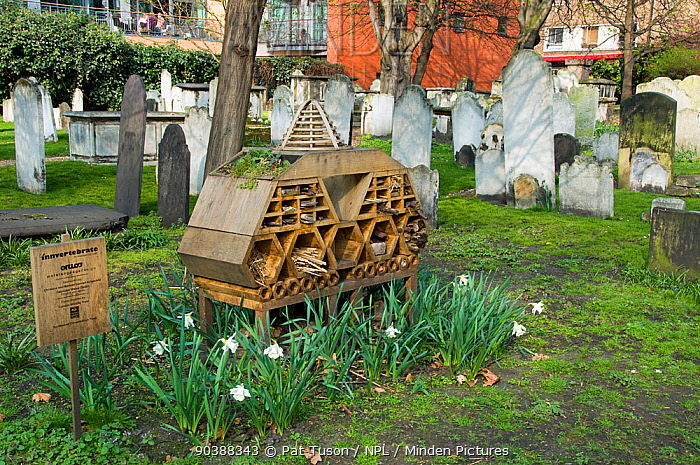 Innvertebrate' the Boutique Bug Hotel or Insect House situated amongst gravestones, Bunhill Fields Burial Ground or Cemetery with flats behind and people on balcony, London Borough of Islington but managed by the City of London Corporation, England, UK  -  Pat Tuson/ npl