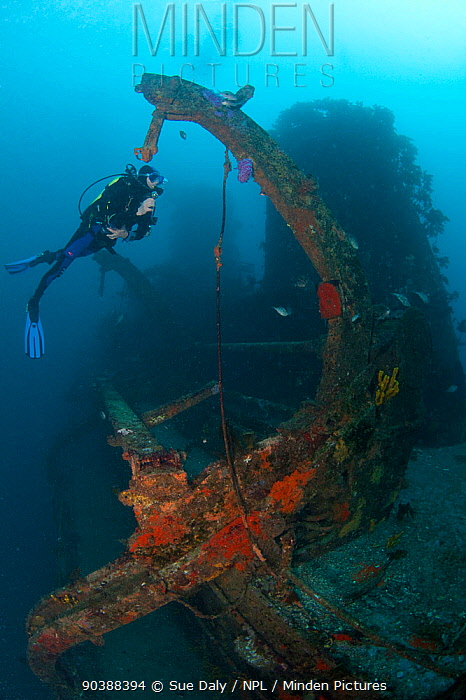 Diver on the wreck of HMNZS Canterbury, Bay of Islands, New Zealand, January 2013 Model released  -  Sue Daly/ npl