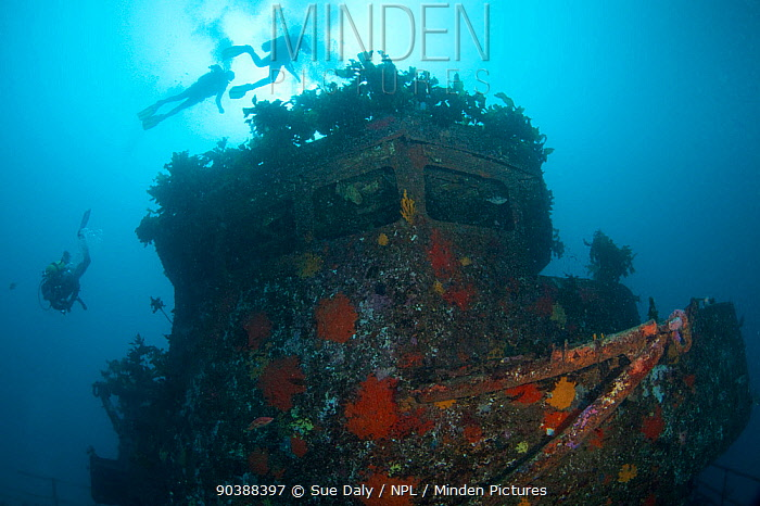 Divers on the wreck of HMNZS Canterbury, Bay of Islands, New Zealand, January 2013  -  Sue Daly/ npl