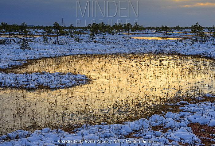 Wetland pool with reflected dawn light Southern Estonia, October 2012  -  Sven Zacek/ npl