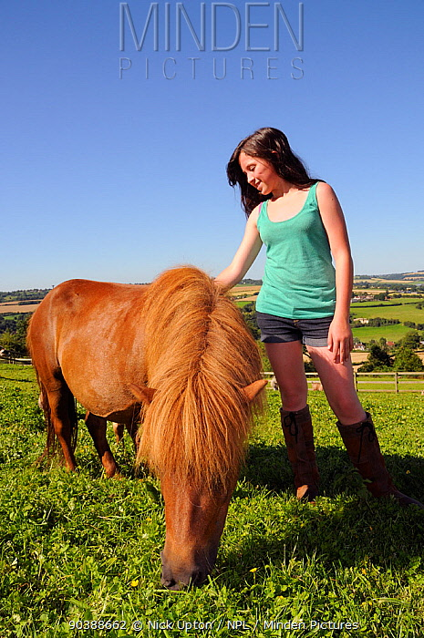 Girl stroking American miniature horse (Equus caballus) mare as she grazes a grassy hillside paddock, Wiltshire, UK, July Model released  -  Nick Upton/ npl