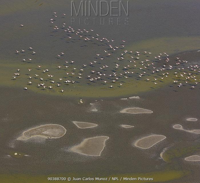 Lesser Flamingo (Phoeniconaias minor) flock, aerial view, Lake Magadi, Rift Valley, Kenya  -  Juan Carlos Munoz/ npl