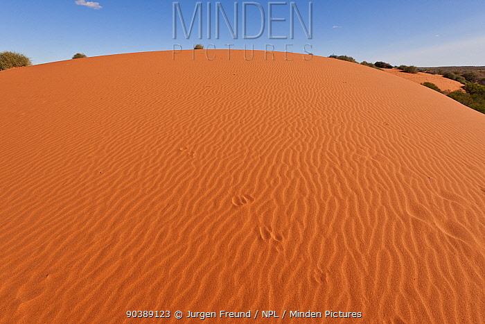 Sand dunes and swales showing tracks, near Oodnadatta Track, South Australia, June 2011  -  Jurgen Freund/ npl