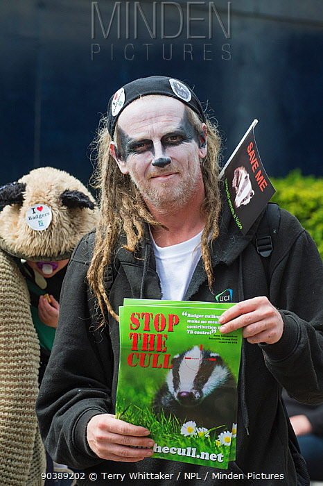 Man with Badger facepaint, holding leaflets which say 'Stop the cull', at anti bager cull march, 1st June 2013 Editorial use only  -  Terry Whittaker/ npl