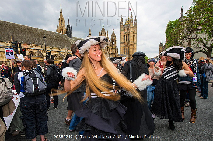 Dancers from the Artful Badger group, dancing in badger costumes, anti badger cull march, near Houses of Parliament, London 1st June 2013  -  Terry Whittaker/ npl