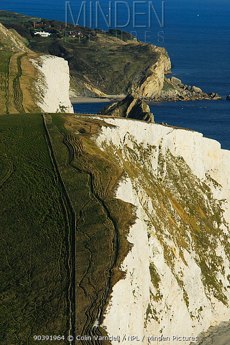 View east from White Nothe with Bat's Head, Swyre Dead in foreground Dungy Head in distance Jurassic Coast, Dorset, UK October 2008  -  Colin Varndell/ npl