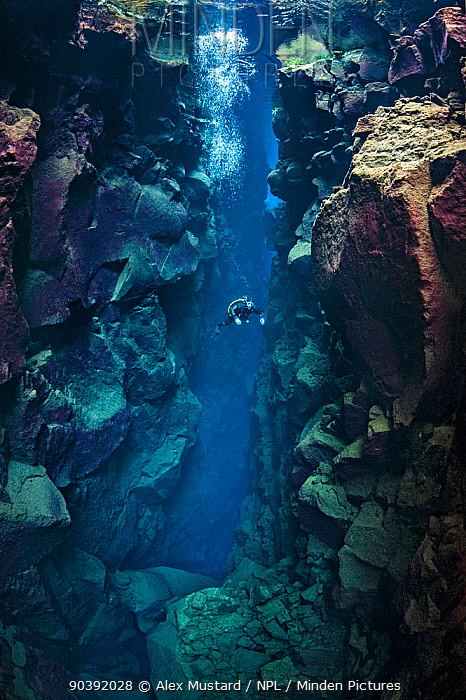 A diver explores Nikulasargj Canyona deep fault filled with fresh water in the rift valley between the Eurasian and American tectonic plates at Thingvellir National Park, Iceland May 2011 In this photo the American plate is on the left and the Eurasian plate is on the right The burgandy colour on the rocks in algae growth This canyon is usually closed to divers and was photographed with special permission of the Thingvellir National Park  -  Alex Mustard/ npl