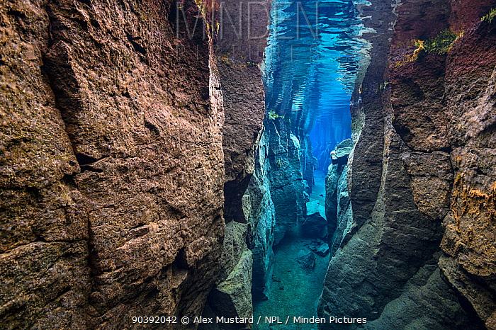 The narrow Nes Canyon, a fault filled with fresh water in the rift valley between the Eurasian and American tectonic plates in northern Iceland  -  Alex Mustard/ npl
