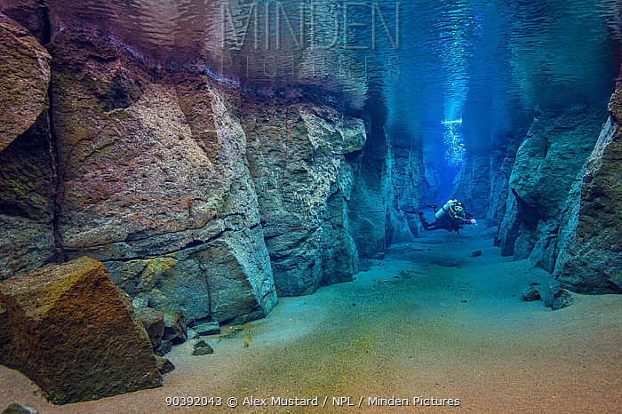 Diver in Nes Canyon, a fault filled with fresh water in the rift valley between the Eurasian and American tectonic plates in northern Iceland  -  Alex Mustard/ npl