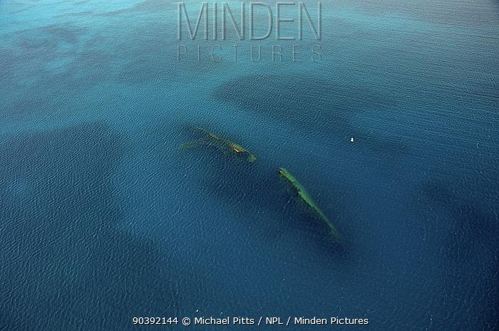Wreck of the MS Antilla, aerial shot Ship scuttled 10th May 1940 Aruba, Dutch Antillies  -  Michael Pitts/ npl
