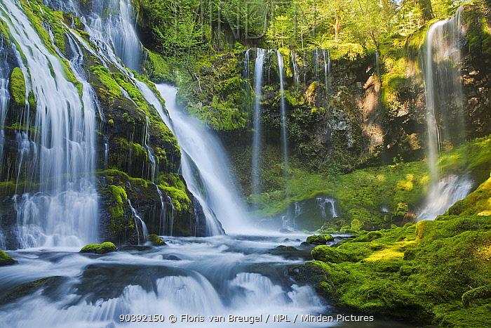 Warm sunlight in waterfall paradise, in Gifford Pinchot National Forest Washington, USA, May 2013  -  Floris Van Breugel/ npl