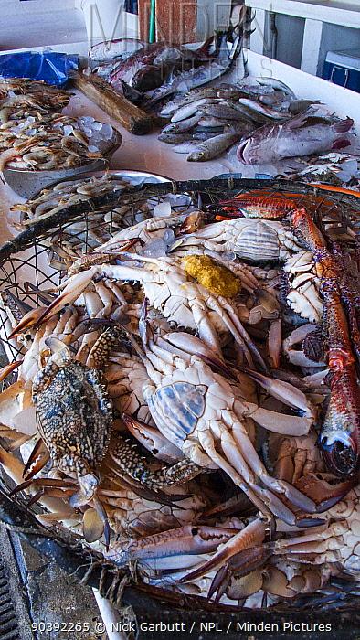 Various shellfish on sale in fish souk (market) in Sharjah, United Arab Emirates April 2013  -  Nick Garbutt/ npl