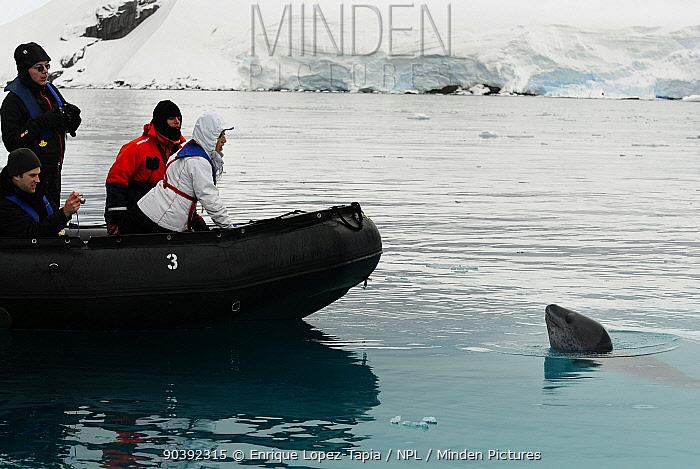 Zodiac boat with curious leopard seal (Hydrurga leptonyx) Wilhelmina Bay, Gerlache Strait Antarctic Peninsula, Antarctica  -  Enrique Lopez Tapia/ npl