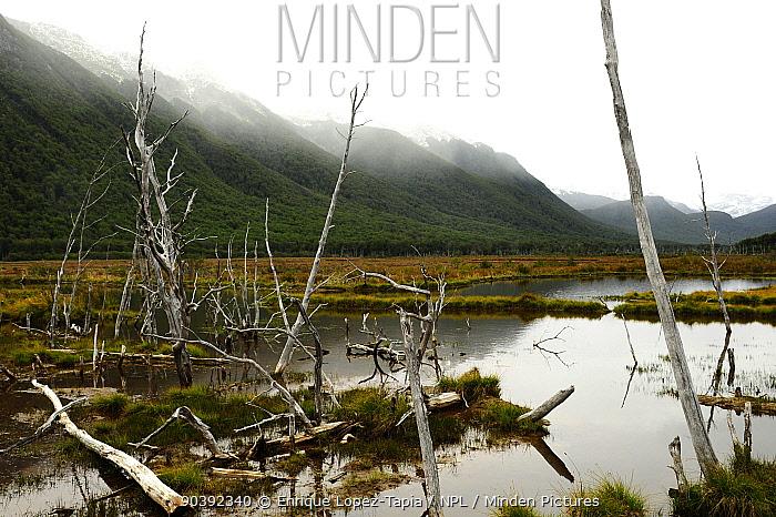 Peatland landscape in the mist, Tierra del Fuego, Argentina  -  Enrique Lopez Tapia/ npl