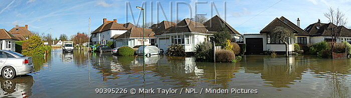 Flooded street in Weybridge, Surrey, England, UK, 10th February 2014  -  Mark Taylor/ npl