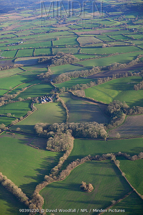 Aerial view of small woods and farmland, Somerset, England, UK, January 2014  -  David Woodfall/ npl