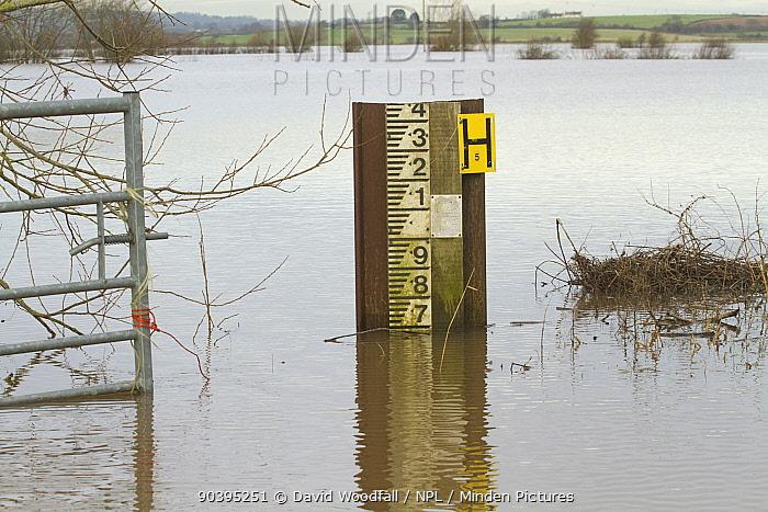Flood marker during January 2014 flooding, Somerset Levels, England, UK, 10th January 2014  -  David Woodfall/ npl
