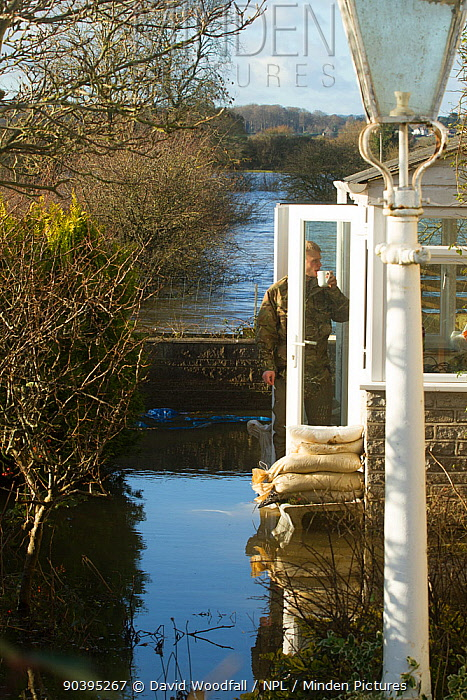 Man standing in doorway of flooded home during January 2014 flooding, Somerset Levels near Langport, Somerset, England, UK, 11th January 2014  -  David Woodfall/ npl