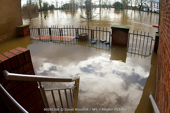 Stairs and garden of club flooded by River Severn (background) following February 2014 floods in Worcester, England, UK, 10th February 2014  -  David Woodfall/ npl