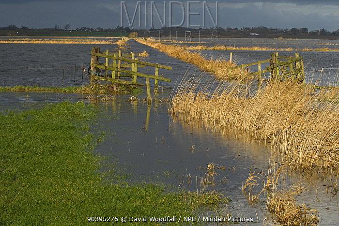 West Sedgemoor Nature Reserve during January 2014 flooding, Somerset Levels, England, UK, 9th January 2014  -  David Woodfall/ npl