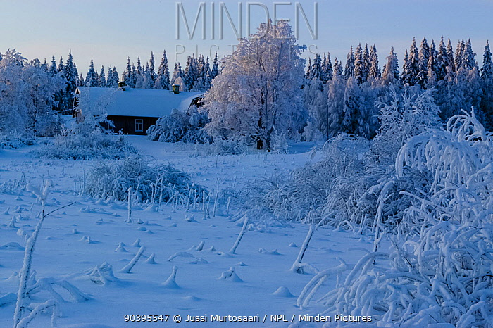 House in snowy pine forest, central Finland, January 2004  -  Unknown photographer