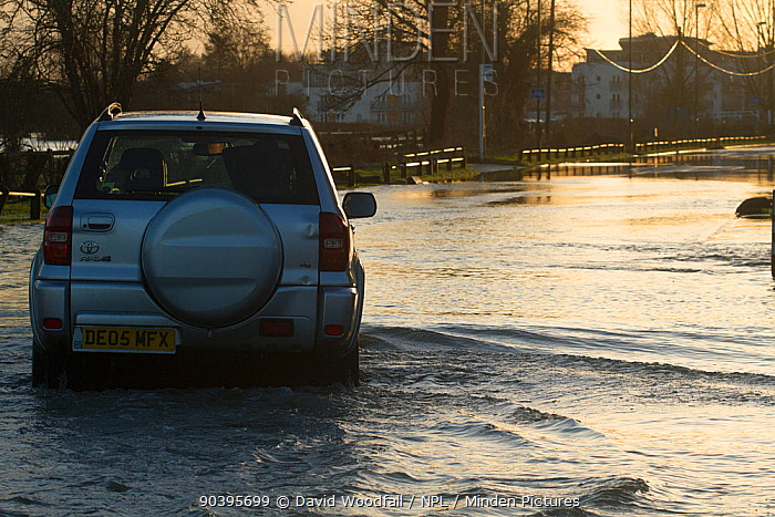 4x4 driving through February 2014 floods from River Thames, Chertsey, Surrey, England, UK, 16th February 2014  -  David Woodfall/ npl