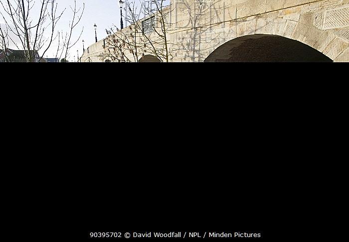 Thames Path sign and Chertsey Bridge during February 2014 flooding, Chertsey, Surrey, England, UK, 16th February 2014  -  David Woodfall/ npl