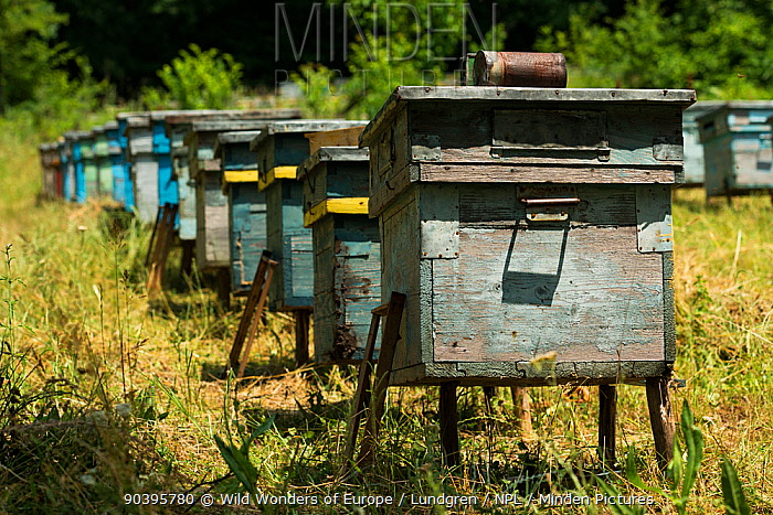 Beehives near to the forest Valea Fagilor close to Macin Mountains National Park, Romania, June  -  WWE/ Lundgren/ npl