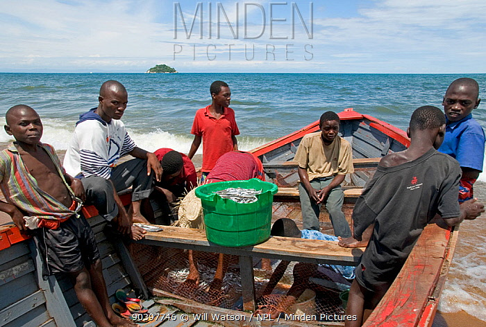 Fising boat and crew on Lake Malawi with basket of 'Usipa', small pelagic Cyprinid fish almost identidical to anchovy, Malawi March 2009  -  Will Watson/ npl