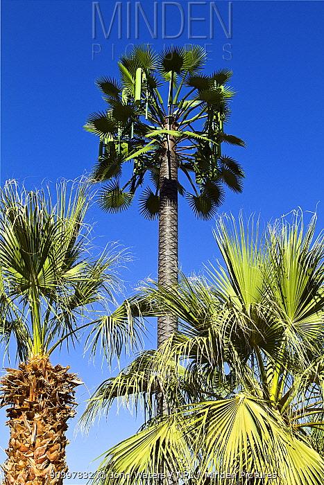 Phonemast disguised as palm tree, Palm Springs, California, USA, June 2012  -  John Waters/ npl