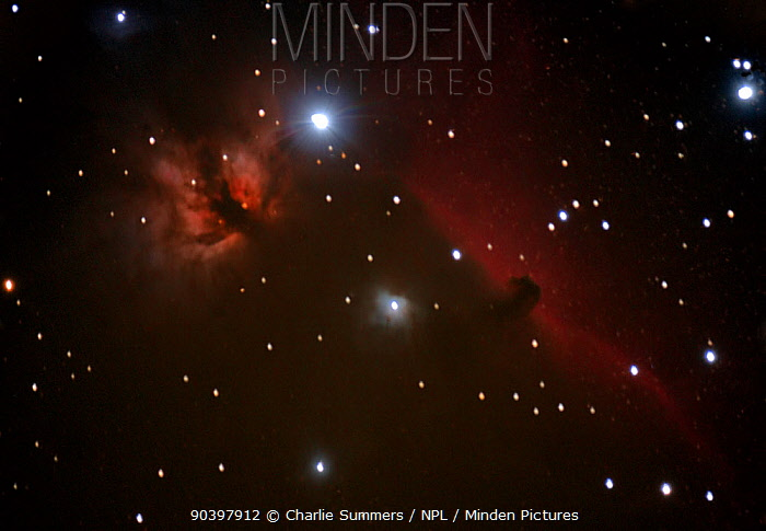 The Horsehead Nebula and NGC 2024 taken from eastern Colorado, USA, on the night of 1st November 2013  -  Charlie Summers/ npl