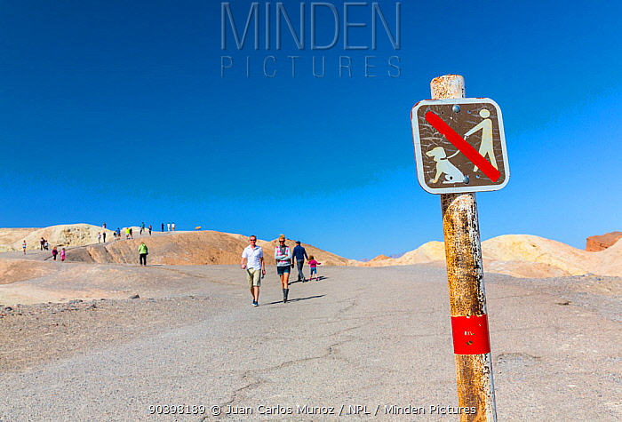 No dog walking sign and tourists at Zabriskie Point, Death Valley National Park, California, USA, March 2013  -  Juan Carlos Munoz/ npl