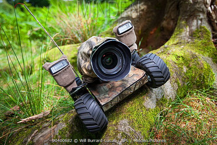 Beetle cam, remote controlled camera buggy set up on tree roots  -  Will Burrard-Lucas/ npl