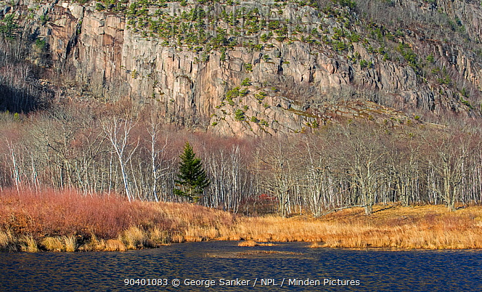Beaver pond Acadia National Park, Maine, USA, December  -  George Sanker/ npl