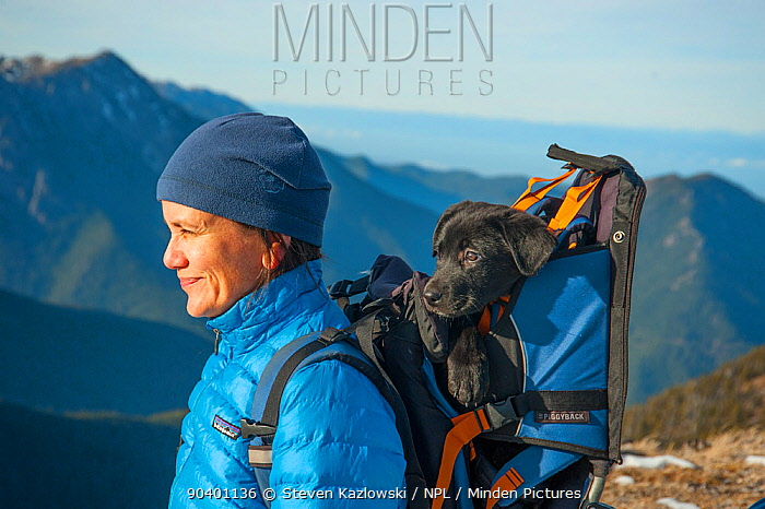 Woman hiker with tired puppy in a backpack, Mount Townsend, northwest Olympic National Park, Olympic Peninsula, Washington, USA November 2013 Model released  -  Steven Kazlowski/ npl