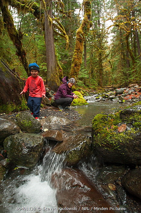 Young toddler boy floats leaves on a creek in the rainforest with his mother, North Fork Skokomish River, Olympic Peninsula, south-east Olympic National Park, Washington, USA, November 2013 Model released  -  Steven Kazlowski/ npl