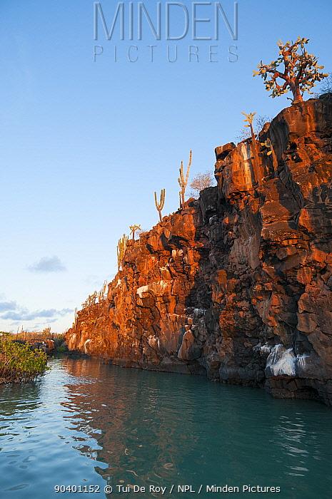 Basaltic cliff bordering Puerto Ayora Harbour, Academy Bay, Santa Cruz Island, Galapagos Islands, June 2009  -  Tui De Roy/ npl