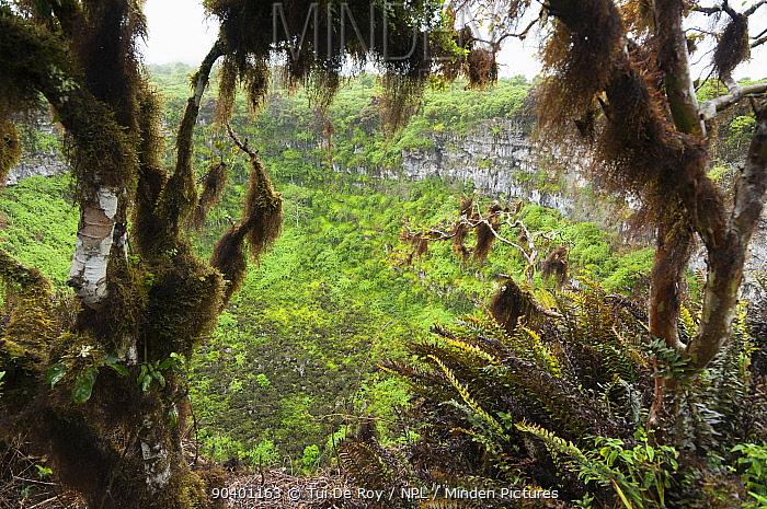 Pit Craters or Los Gemelos, Highlands, Santa Cruz Island Galapagos Islands  -  Tui De Roy/ npl