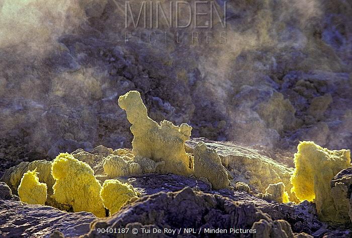 Sulphur fumaroles inside caldera of Sierra Negra Volcano, Galapagos Islands  -  Tui De Roy/ npl