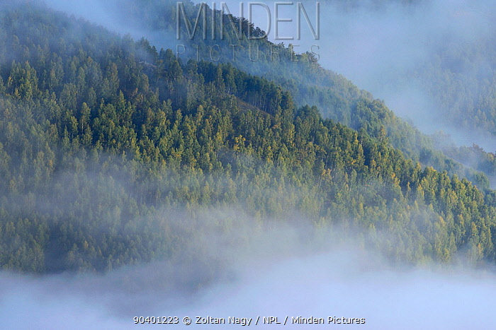 Early autumn fog above the forests of the Retezat National Park Transylvania, Romania September  -  Zoltan Nagy/ npl