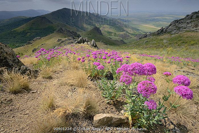Landscape with Campions (Silene compacta) and the Macin Mountains National Park Romania, June 2013  -  Zoltan Nagy/ npl