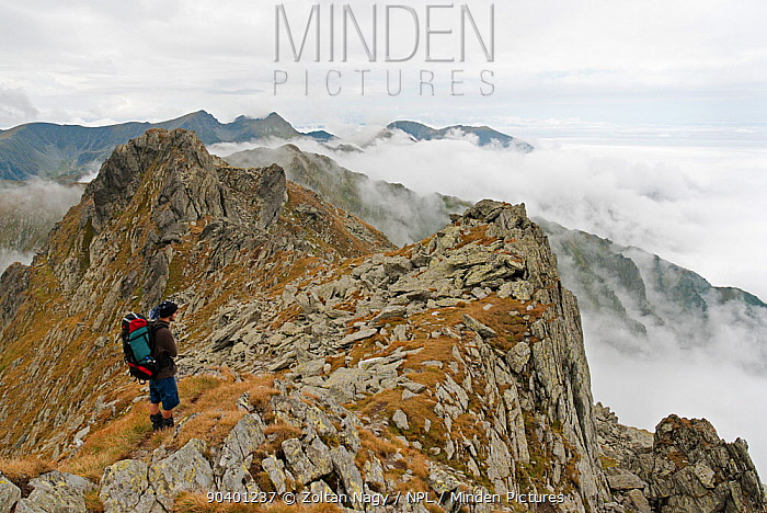 Hiker on the ridge of the Fogaras Mountains, Carpathian Mountain Range, Transylvania, Romania August  -  Zoltan Nagy/ npl