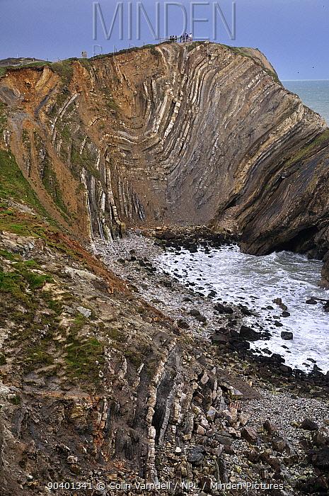 Folded strata known as Lulworth Crumple, Stair Hole, Lulworth, Jurassic Coast, Dorset, UK March 2013  -  Colin Varndell/ npl