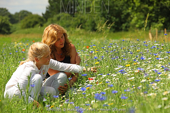 Mother and daughter observing bees in wild flowers at Bee World, Bishops Meadow, Farnham Surrey, England, UK, July 2014 Model released Bee Worlds is an initiative of Friends of the Earth  -  Mark Taylor/ npl