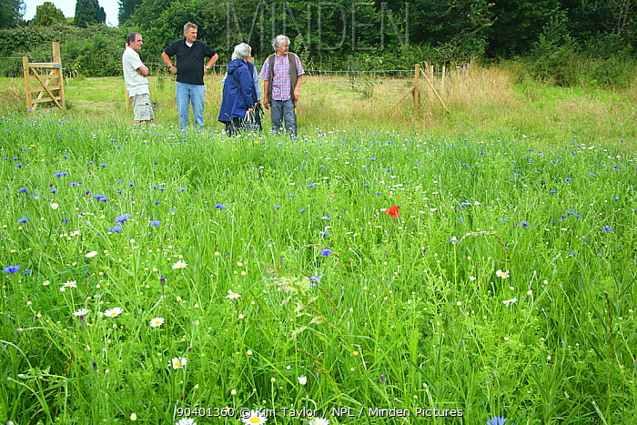 Group of people looking at the wild flowers and bees at Bee World at Bishops Meadow, Farnham Surrey, England, UK, July 2014 Bee Worlds is an initiative of Friends of the Earth  -  Kim Taylor/ npl