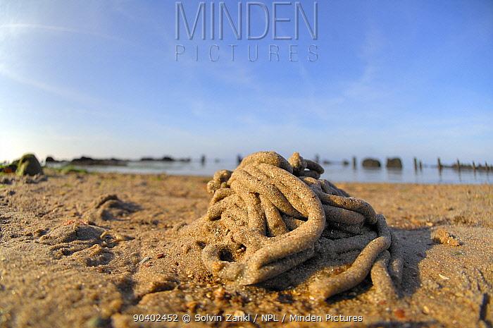 Lugworm (Arenicola marina) cast on beach, on beach of Wadden sea, Heligoland, Germany, June  -  Solvin Zankl/ npl